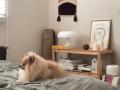 韩国博主独居生活:一只狗,一杯咖啡